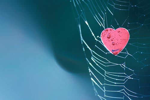 burnout captures your heart
